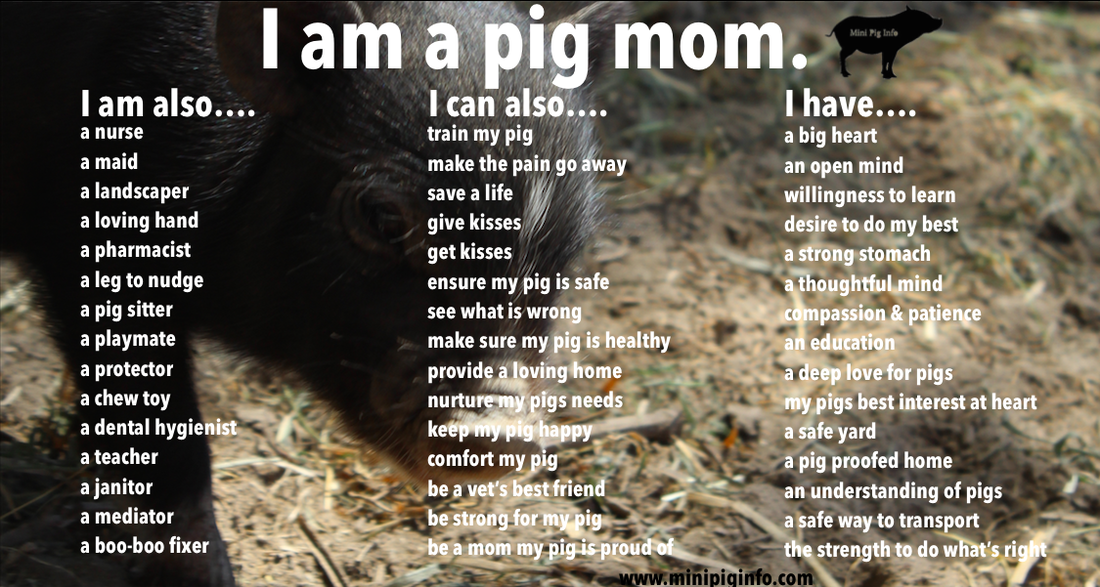 Things New Mini Pig Parents Should Know Mini Pig Info