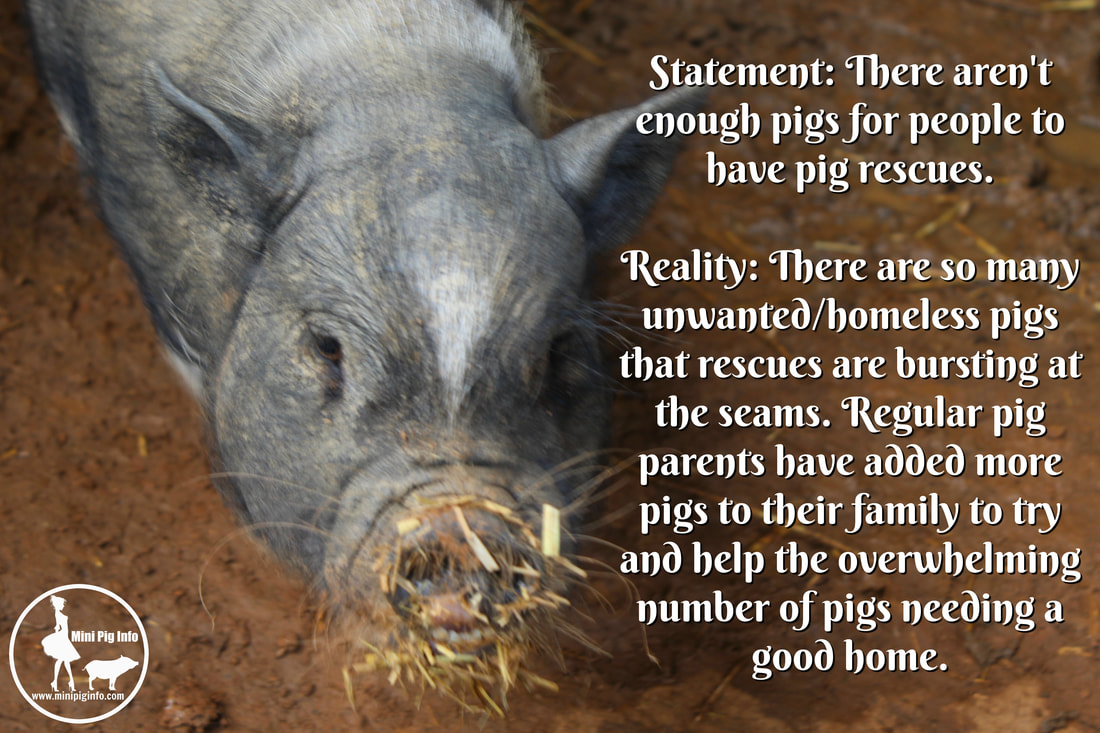Pigs are assholes
