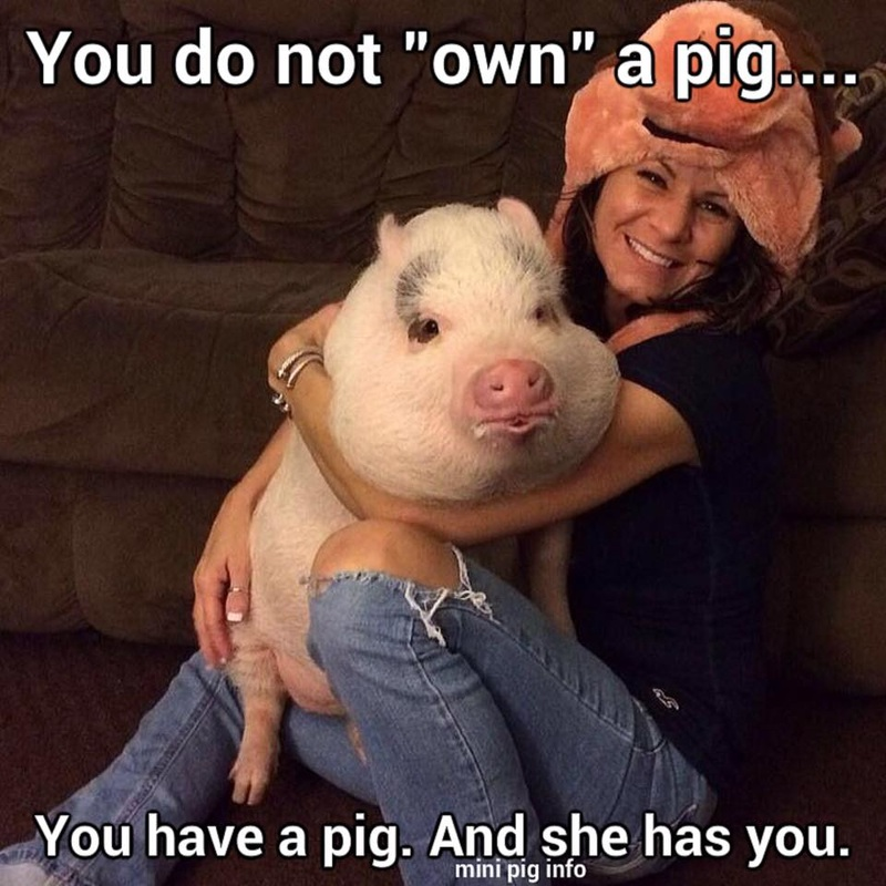 you don't own a pig